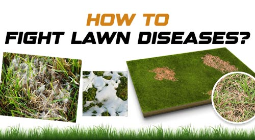 How to Fight Lawn Diseases