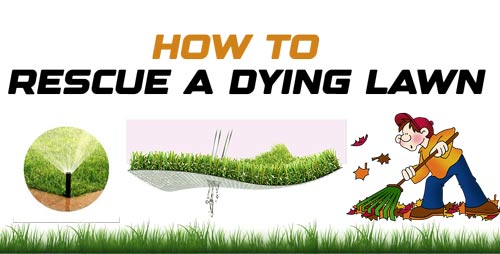 Rescue a Dying Lawn