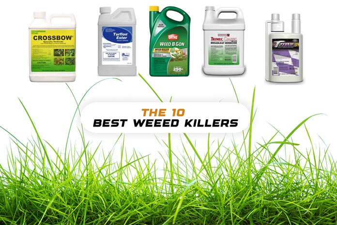 Weed Killers for Creeping Charlie
