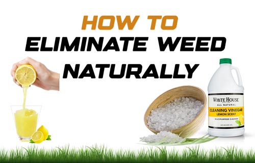 eliminate weed naturally