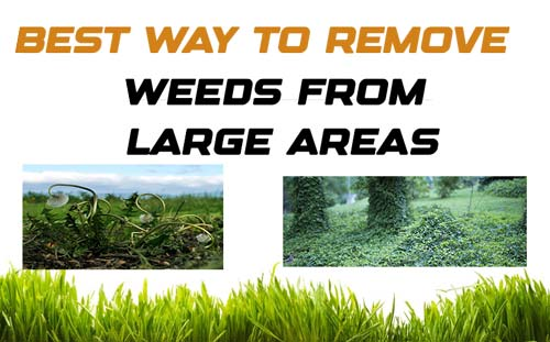 Weeds From Large Areas