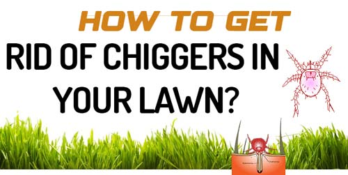 Get Rid of Chiggers In Your Lawn