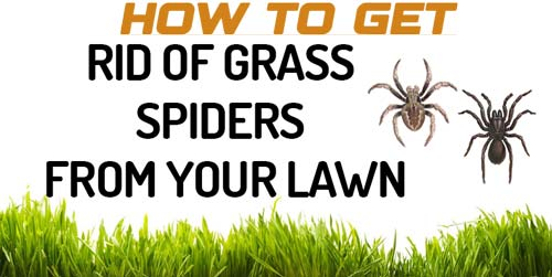 Get Rid of Grass Spiders from your Lawn