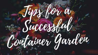 Tips for a Successful Container Garden