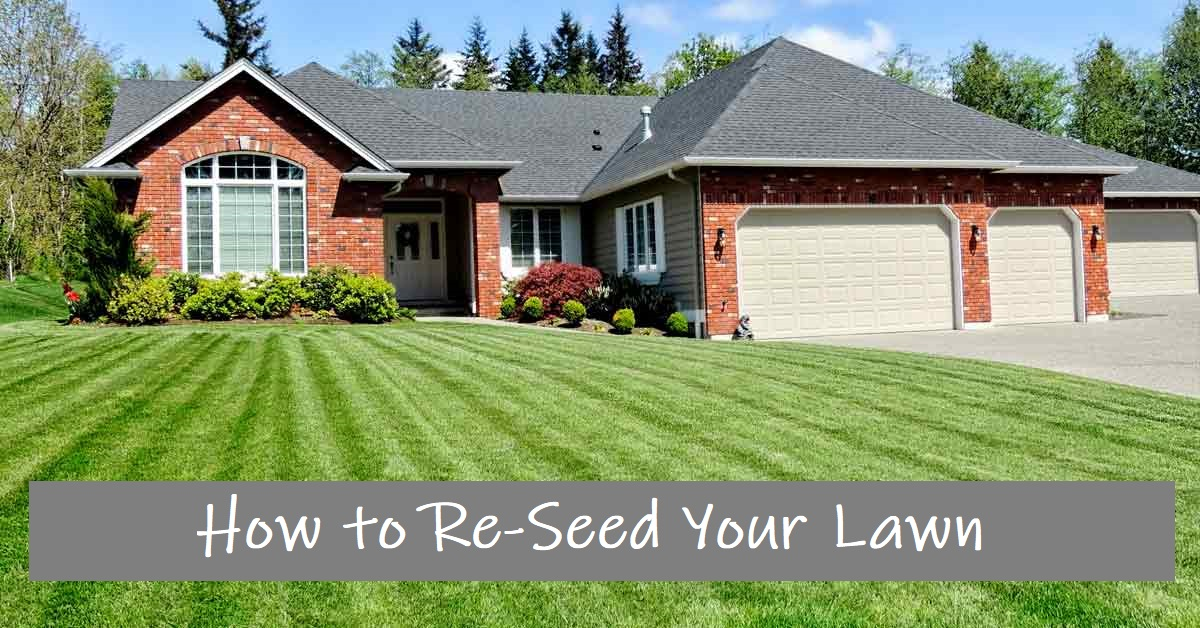 How to Re-Seed Your Lawn