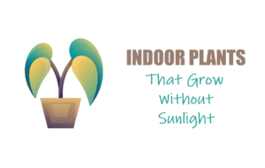 Plants that grow without sunlight