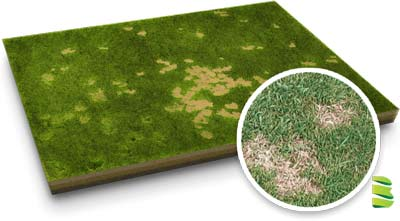 St Augustine Grass Diseases